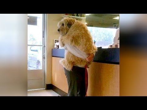 ANIMALS GO TO THE VET: Funniest REACTIONS - You'll LAUGH ALL DAY LONG - UCKy3MG7_If9KlVuvw3rPMfw