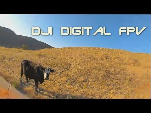 DJI Digital FPV Goggle recording with low cruising and low light - UCR11-oHuq4YWAQlIGo4EzNg