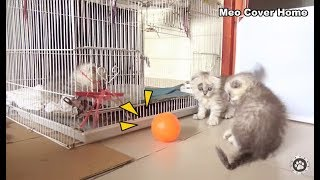 Two Kittens Play With Ball | Kittens And Ball