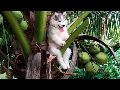 Funniest 🐶 Dogs and 😻 Cats - Try Not To Laugh 🤣 - Funny Pet Animals' Life