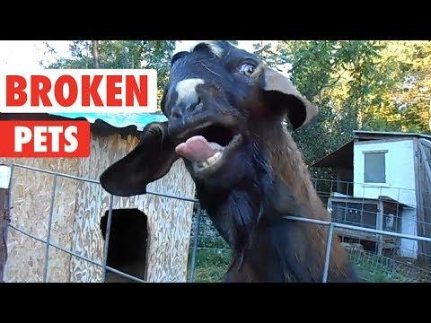 Weirdo Pets   I Think Your Pet Is Broken... - UCPIvT-zcQl2H0vabdXJGcpg