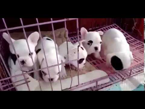 TRY NOT TO LAUGH ,Cute DOG Videos , Funny Videos 0216 1 21