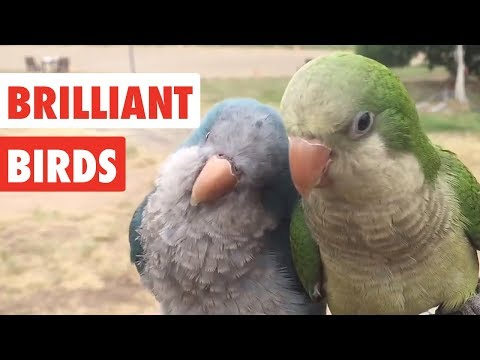 Brilliant Birds | Funny Bird Video Compilation 2017 - UCPIvT-zcQl2H0vabdXJGcpg