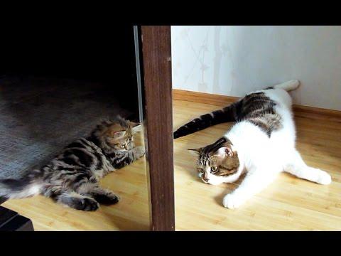 Cats and Cute Kittens Playing together - UCERQZLRMniqsMlgBxme32cQ
