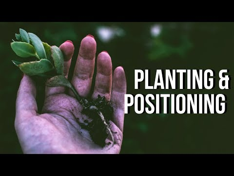 Planting and Positioning