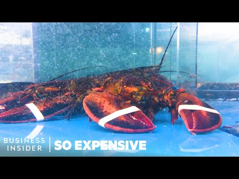 Why Lobster Is So Expensive | So Expensive - UCcyq283he07B7_KUX07mmtA