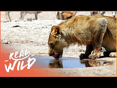 Makadikgadi: Wild Animals Of Botswana | [Predators And Preys Documentary] | Wild Things - UCbq-4OJxnziD3awH-aTezeA