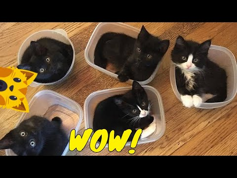 💖 Happy cat mom - Funny Cat Videos / Cute Cats And Kittens - UCKQ5IzqfeiT510eYCjwpekg