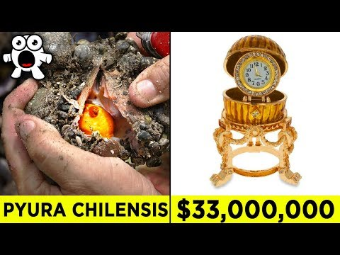 Top 10 Luckiest Discoveries That Made People Rich - UCkQO3QsgTpNTsOw6ujimT5Q