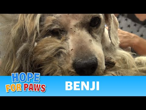 Hope For Paws: Benji was homeless his whole life... WATCH what happens next!  Please share. - UCdu8QrpJd6rdHU9fHl8J01A