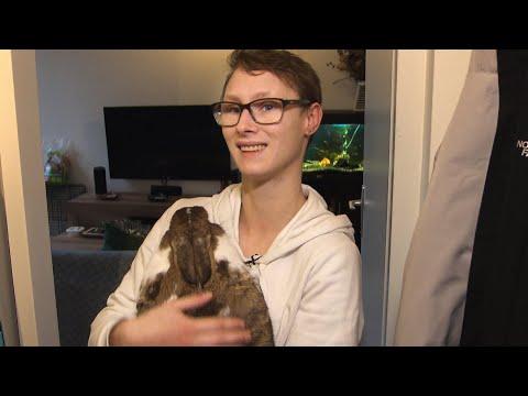 Dierenverzekeringen populair: 'Geef meer geld uit aan mijn konijn dan aan mezelf'