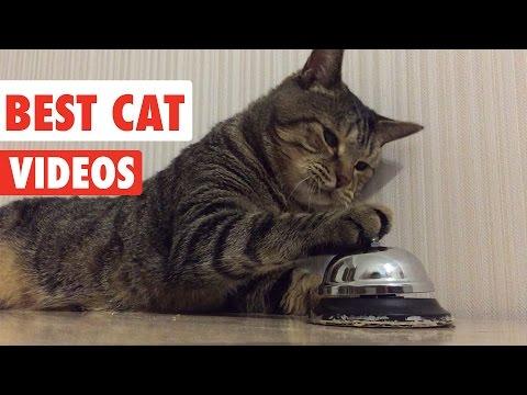 Best Cat Videos Ever | Funny Cat Video Pet Compilation 2017 - UCPIvT-zcQl2H0vabdXJGcpg