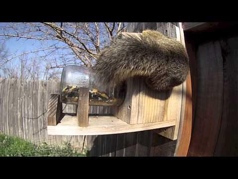 Squirrel Feeder GoPro Hero3 - UC1pO4LgsW9nDY3tXlE9zHVw