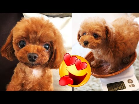 Baby Dogs 🐶😍 Aww Cute and Funny Puppies Moments Videos Compilation #3  🐶😍 Perritos Tiernos Bebes - UCLPtVV49scfOQ79zT9Qxiug