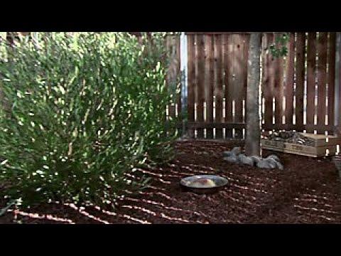 How to Make a Secret Pet Garden - DIY Network