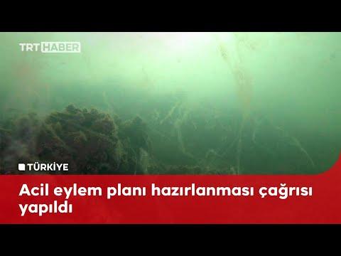 Asıl tehlike denizin altında: Salyalar her yeri kapladı