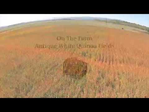 On The Farm Antique White Quinoa Fields