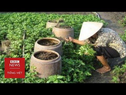 Chuyện gì đã và đang xảy ra tại Vườn rau Lộc Hưng? - BBC News Tiếng Việt