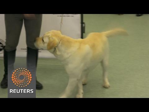 Labrador Retriever still America's top dog