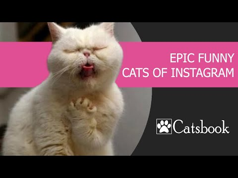 CATS | Epic funny cats of Instagram | Best Funny Cat Videos 2019 by Catsbook