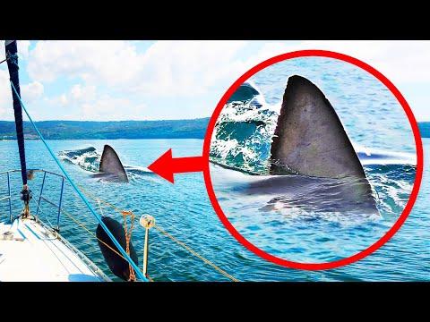 Si ves una aleta en el agua, puede que no sea un tiburón