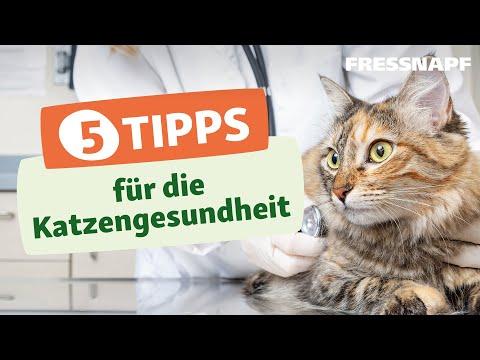 5 Tipps für die Katzengesundheit - Krankheiten bei Katzen