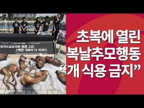 '식용 개 반대!'…초복에 열린 '복날추모행동' ...
