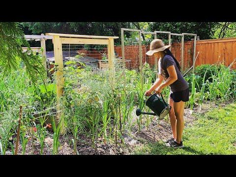 Feeding The Garden With Worm Castings & Worm Tea