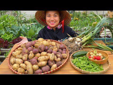 Hái dâu,đậu hà lan,bí còi,nhổ tỏi&khoai tây trồng chậu,cách tỉa cây cà pháo,cà tím cho trái sai #906