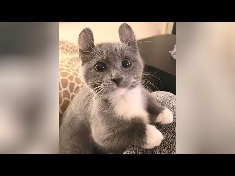 Best funny animal and pet videos - You will laugh