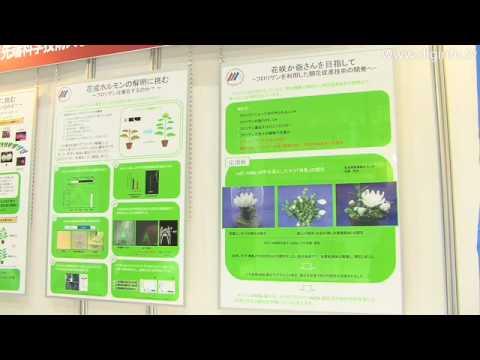 奈良先端科学技術大学院大学 植物開花促進技術花咲かホルモン : DigInfo - UCOHoBDJhP2cpYAI8YKroFbA