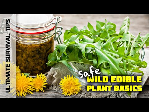 5 Laws for Wild Edible Plant Safety - For Beginners - Best Survival / Bug Out Food