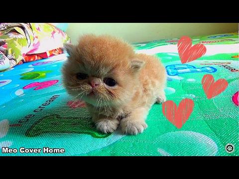 Kittens 2 Weeks So Cute | Funny Newborn Kittens 2017 | Best Ever Moment Cat 2017 - UCBn8kw_EI2In6HPuWoUvUqg