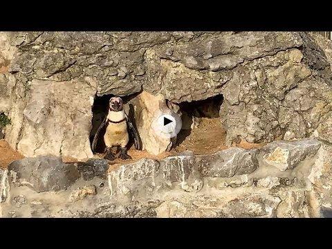 Despertar entre focas, pingüinos y leonés marinos