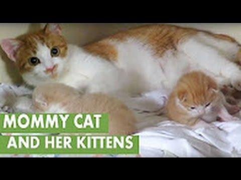 Newborn kittens -  Newborn kittens cry when mom is away -  Super Cute and Funny Kitten Moments #3 - UCBXaUmaJm76bgkT4pE4TeWQ