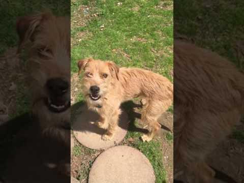 Adopt Aros on Adopt-a-Pet.com