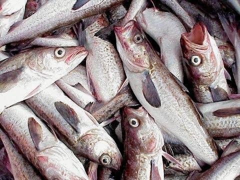 Business Intelligence: Whitefish