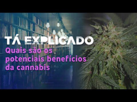 Cannabis: saiba quais são os potenciais benefícios e o que é permitido no Brasil   Tá Explicado