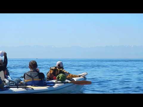 Kayaking with Orcas- San Juan Island, WA