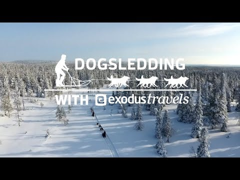 Dogsledding with Exodus Travels