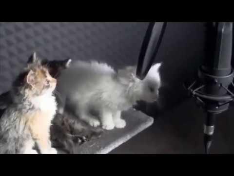 Cute kittens singing in the studio - UCln8lI9-VBu3Bv9o3CCuGFQ