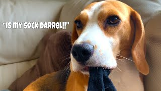 My Dog is A Puzzle | TALKING DOG | Funny Dogs Louie and Marie