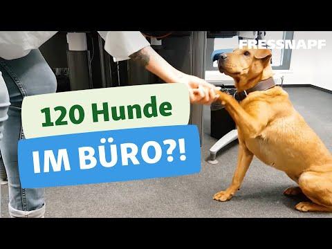 Bürohunde - Ein Tag in der Zentrale von Fressnapf