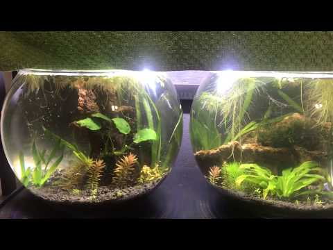 New 3.5 Gallon Nano Tank (bowl) Project and Cherry Shrimp - Part 3