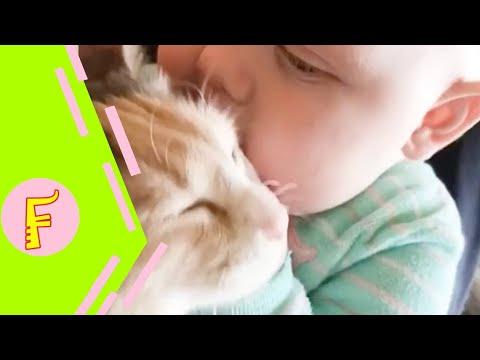 Baby and Cat Fun and Fails - Funny Baby Video - UCPMwKz6-urUB2AZ2N1F4ywg