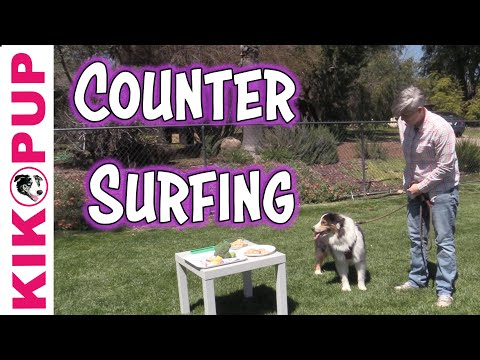 Stop Counter Surfing - Dog Training Games