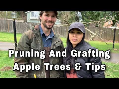 Apple Tree Pruning & Grafting Tips with Nick at Growing Back To Eden
