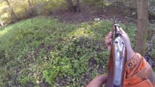 Le renard en deux leçon