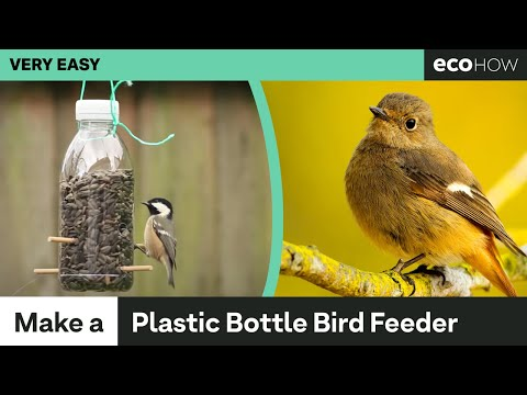 Eco How: How to make a Bird Feeder from a Plastic Bottle - UCe2t8bJHJuR4oQIvXEDepeQ