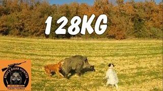 sanglier de 128kg en allant aux grives